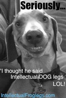 Cool Smiling Dog